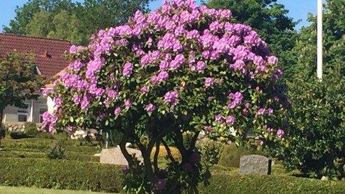 Tomme gravsteder belaster kirkegårdene