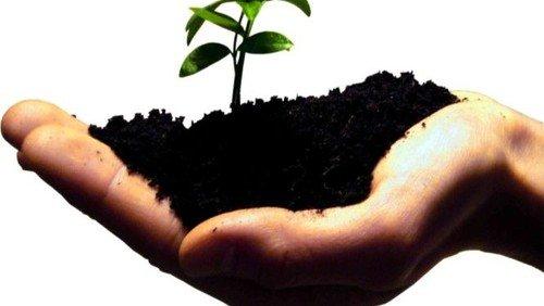 Bliv frivillig i kirken - og få ting til at gro