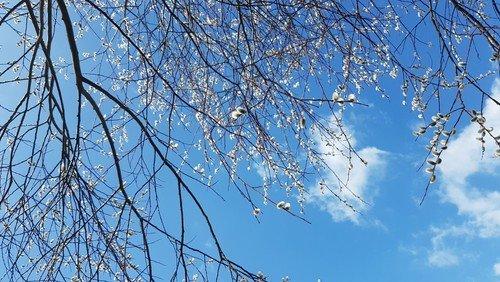 Frühling, Frühling...