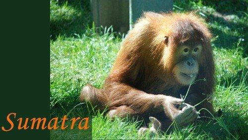 Sumatra - ein Fahrradabenteuer