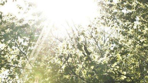 Sengeløse Nyt 6/17 - En håbefuld sommerhilsen til trøst og opmuntring