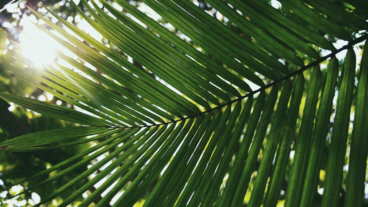 Palm Sunday 2019 Sermon: Crown Me or Kill Me!