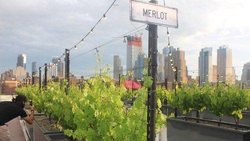 Op på tagene: urban farm & vingård