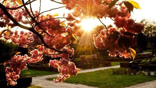 Nyt fra Rold sogn - Kirkegårde under forandring