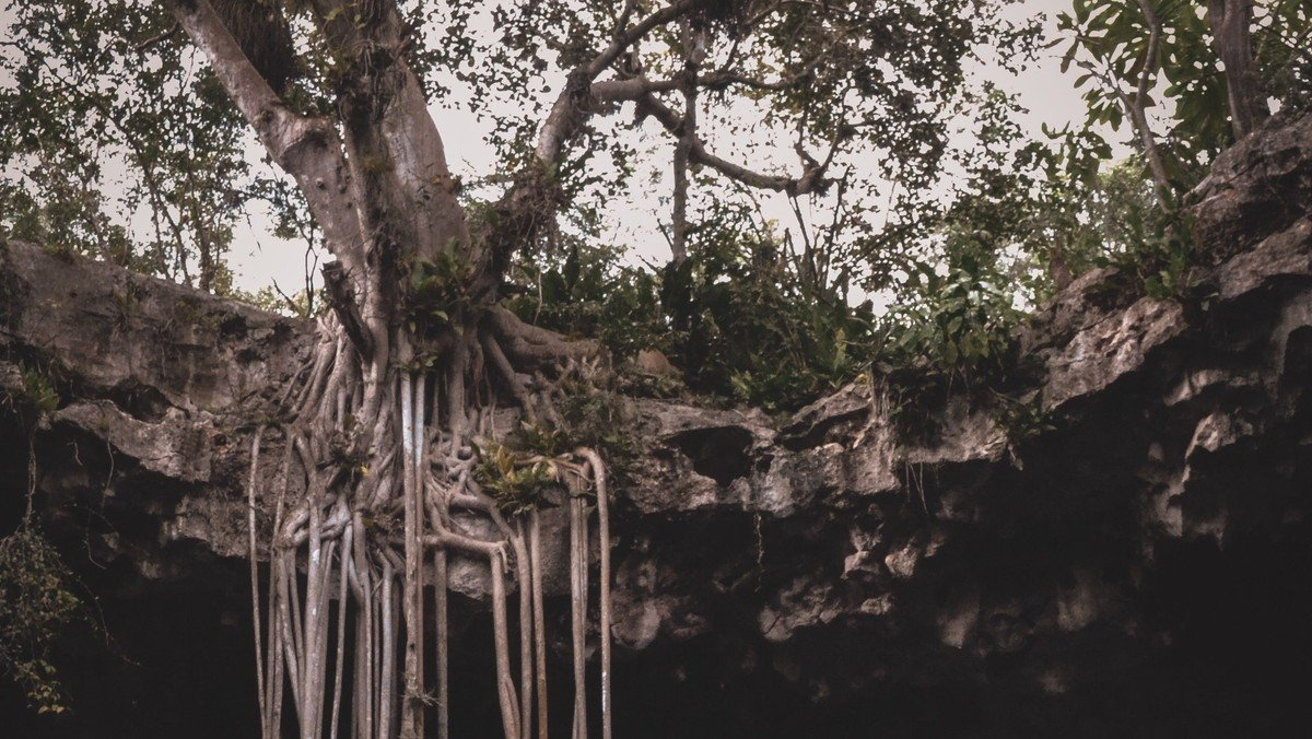 Sermon: Rooted in Repentance