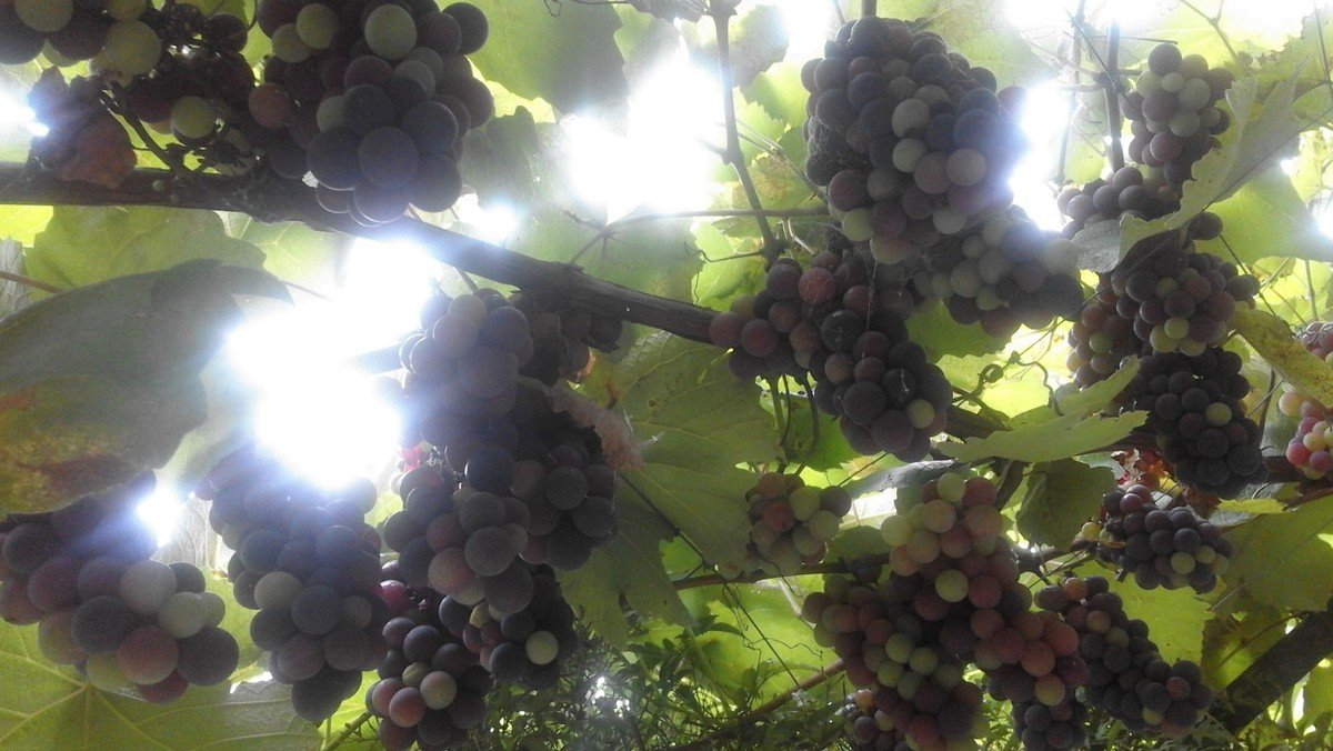 Gemeinsam arbeiten im Weinberg des Herrn