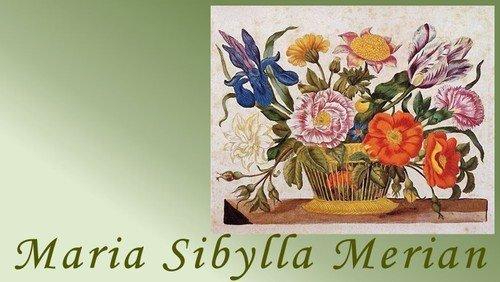 Maria Sybilla Merian