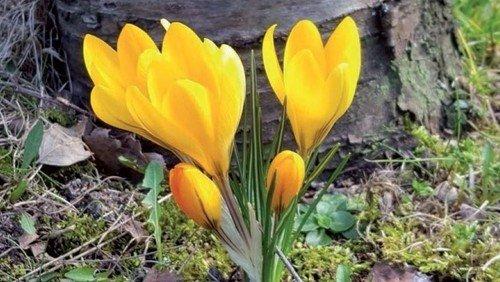 Kirkeblad Astrup-Rostrup: marts-juni
