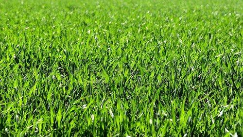 Vi kommer på græs igen