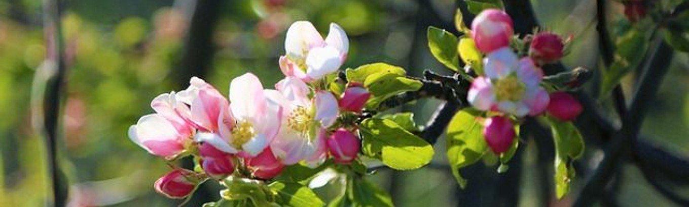 Auferweckung Jesu zu neuem Leben - Osterbrief 2020 von Beate Hornschuh-Böhm #WirSindDa