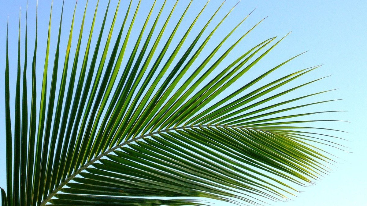 Activities for Palm Sunday
