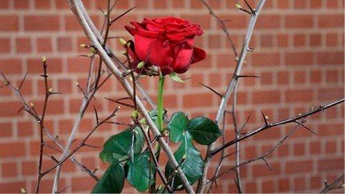 Karwoche – Liebe ist stark wie der Tod
