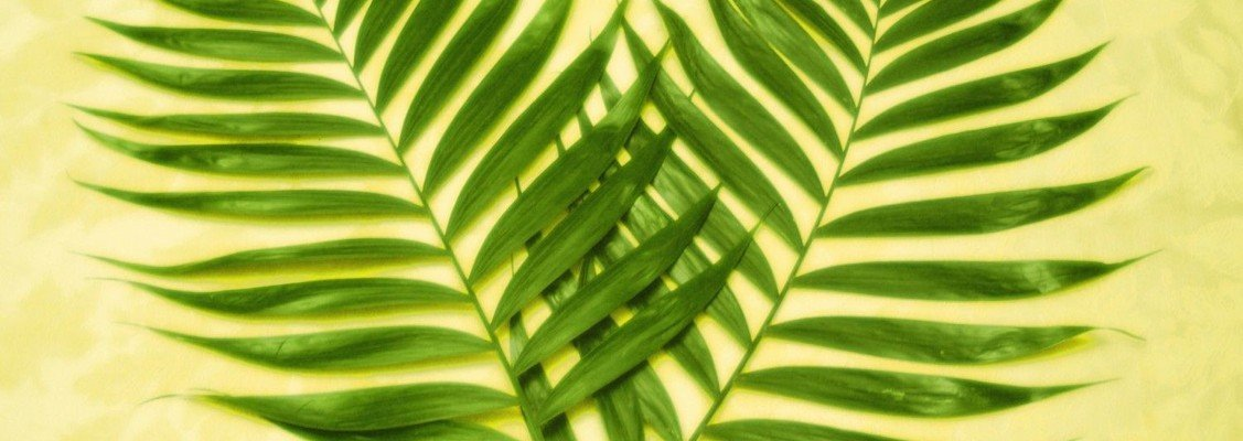 Tanker til palmesøndag af Maria Brink Hesel