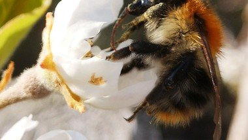 Unser erster Honig!