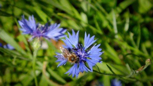Bienenfutter auf dem Alten Zwölf-Apostel-Kirchhof
