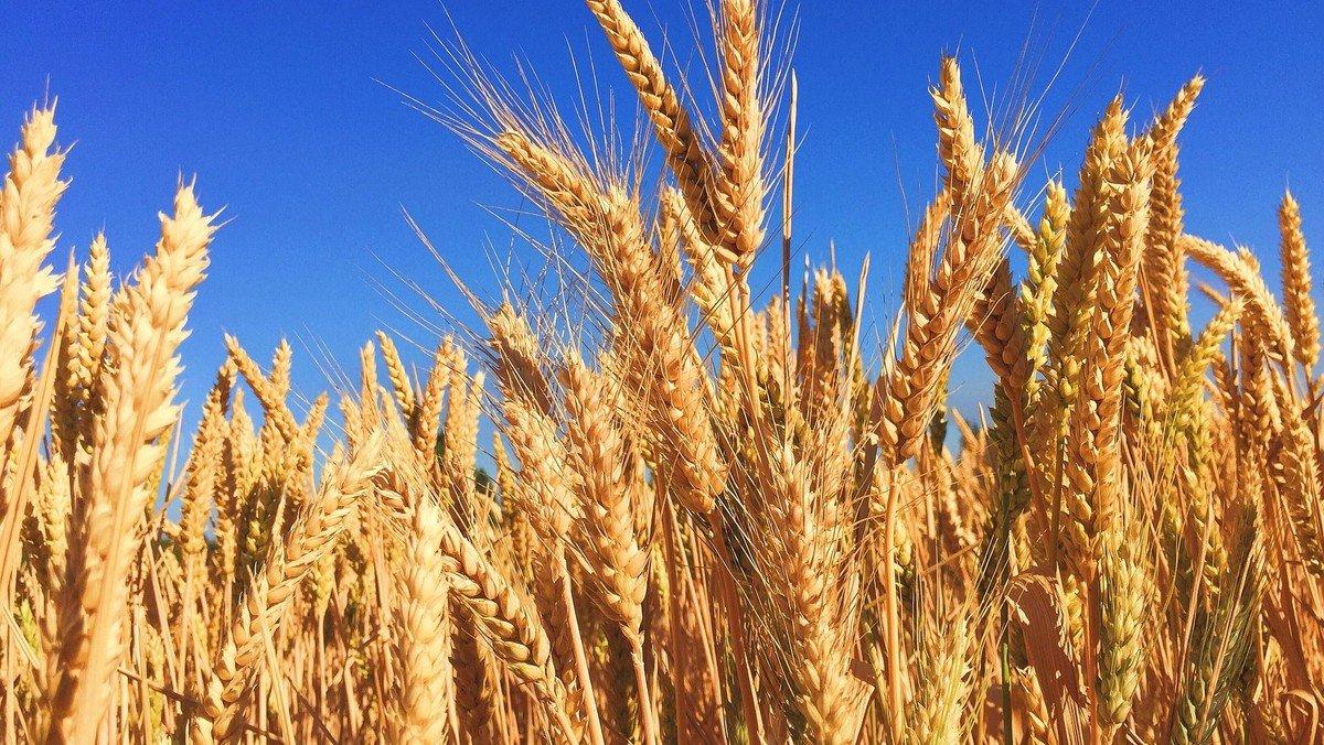 Hvorfor fejres høsten med en særlig gudstjeneste?