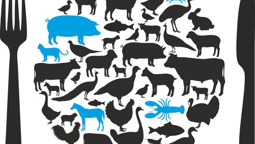 Dürfen Menschen Tiere essen?