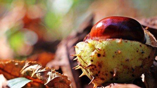 Herbstdeko basteln – Ideen für Zuhause