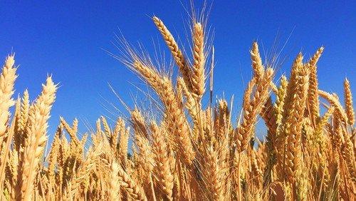 Harvest Festival Service of Holy Communion - Sunday 4th October