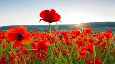Service of Remembrance, 8 November 2020 beginning at 10:55am