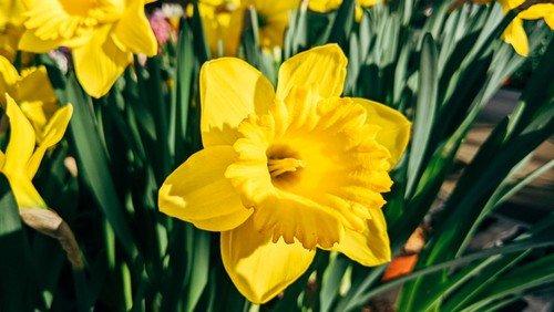 Påskedag - Glædelig påske