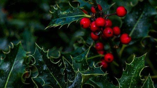 Julegudstjenester d. 23. og 24. december
