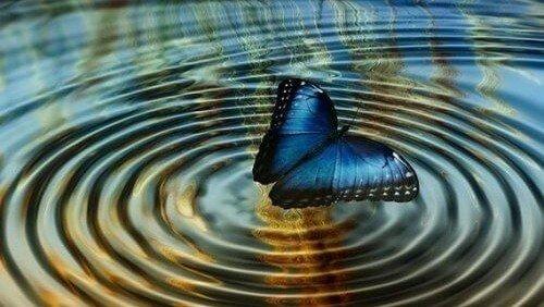 Nytårstanker – sommerfugleffekten