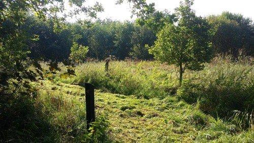 Planlagt jagt præstegårdsskov