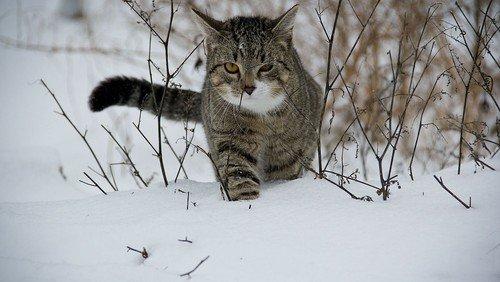Musik Video | ABC die Katze lief im Schne