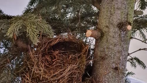 Juletræet blev båret ud