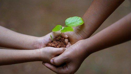 Lad vore hænders nøgne træ få blomst og blade