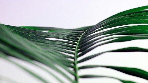 Onlinegudstjeneste & Prædiken til Palmesøndag