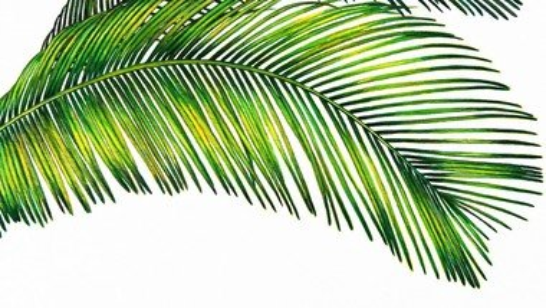 Audio-Gottesdienst zum Palmsonntag mit Pastorin Britta Goerke