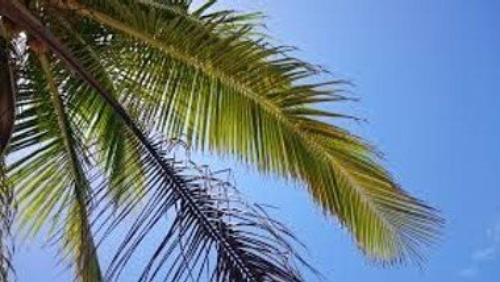 Palmesøndag, 28. marts