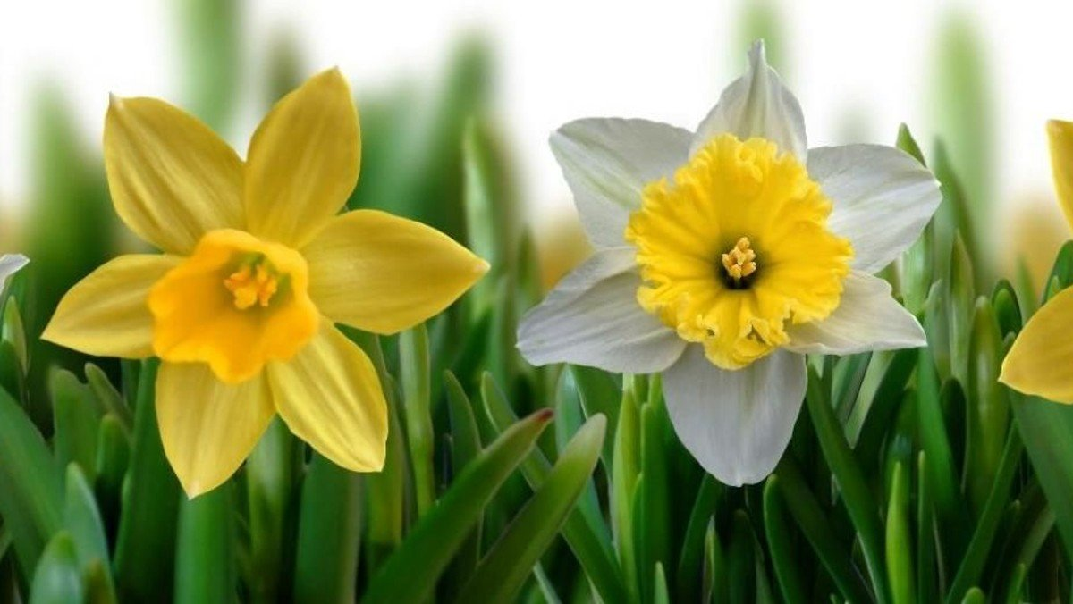 Lyt til påskens salmer