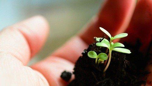 Klimafasten – 7. Wochenthema: Neues wachsen lassen