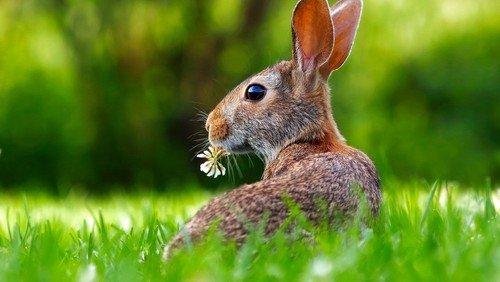 Ostern für Kinder und Familien