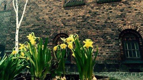 Følg påskegudstjenesten LIVE søndag kl. 10.30