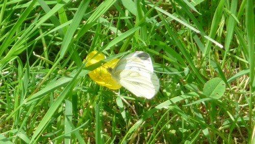 Geschichten von Gott und der Welt (15): Von Zitronenfaltern und anderen Schmetterlingen