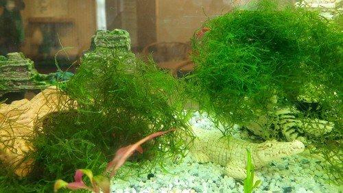 Neues Aquarium in der Martin-Luther-Kita