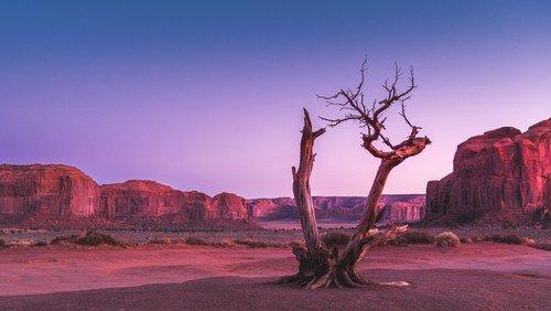 Særlingen i ørkenen