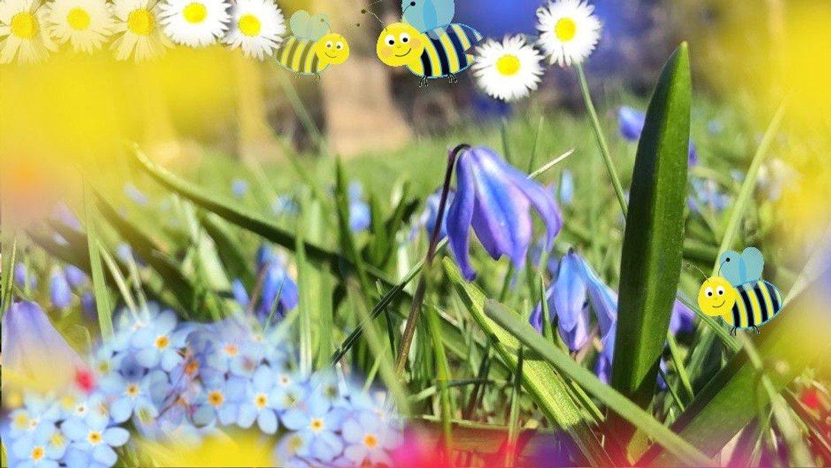 Sommer der Wildbienen