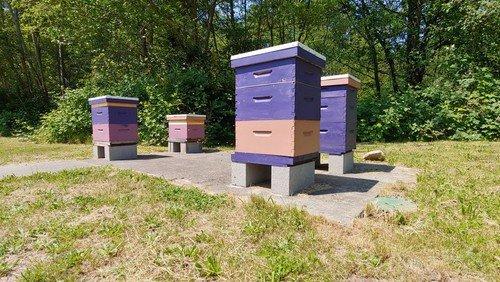 Bee Update!