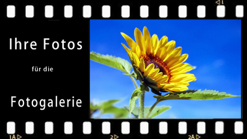 Sonnenblumen-Mitmachaktion