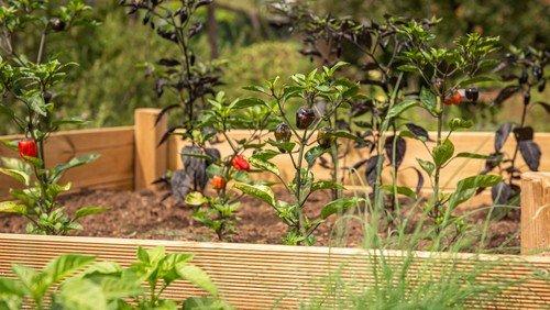 Hochbeete bauen im FAMILIENGARTEN - für und mit Nachbarn - mit anschließendem Grillen