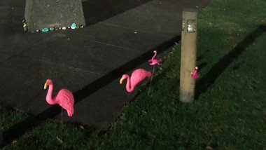 The Flamingos are back!  But where did they come from!?