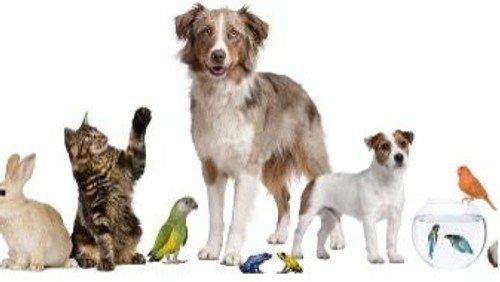 Pet service July 18th 2021