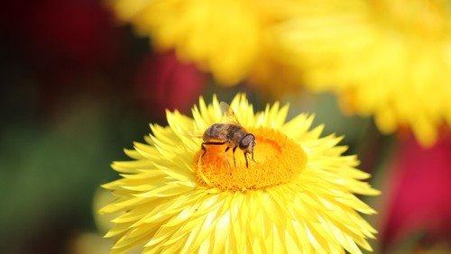 Neue Honigernte!