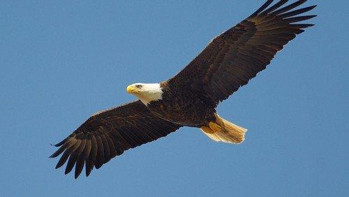 Auf Adlerflügeln