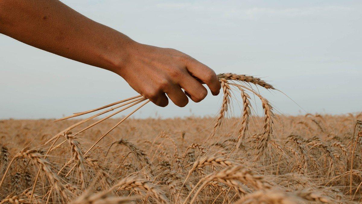 Høsttid er takketid